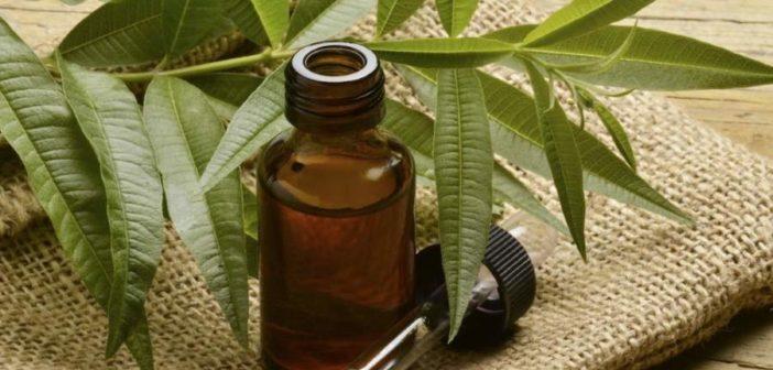 Tea Tree Oil: proprietà, benefici e controindicazioni. Scopri le proprietà del Tea Tree Oil, i benefici per la salute, come utilizzare l'olio di melaleuca come rimedio naturale contro brufoli o per la pulizia della casa, le controindicazioni e gli effetti collaterali.