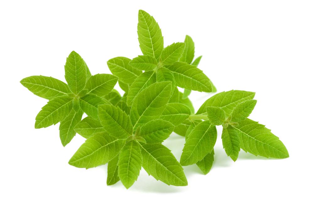Verbena propriet usi e controindicazioni della pianta - Verbena pianta ...