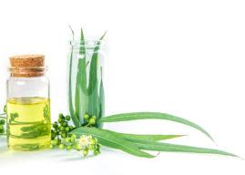 Olio essenziale di eucalipto: proprietà, benefici, usi e controindicazioni