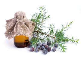Olio essenziale di ginepro: proprietà, benefici, usi e controindicazioni