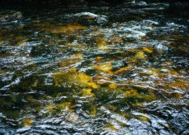 Fiore di Bach Rock Water, per chi è troppo rigido con se stesso