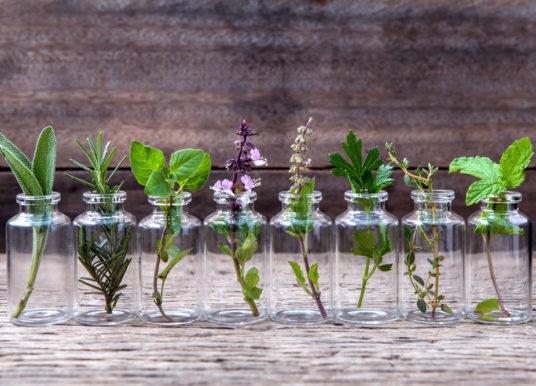 Olio essenziale di Monarda fistulosa: proprietà, benefici, usi e controindicazioni